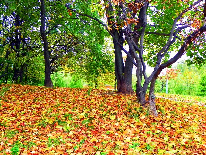 Листья в парке