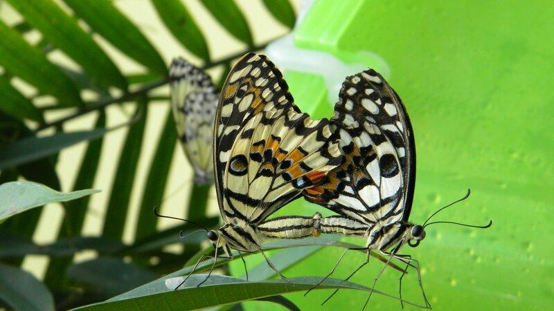 бабочкин секс