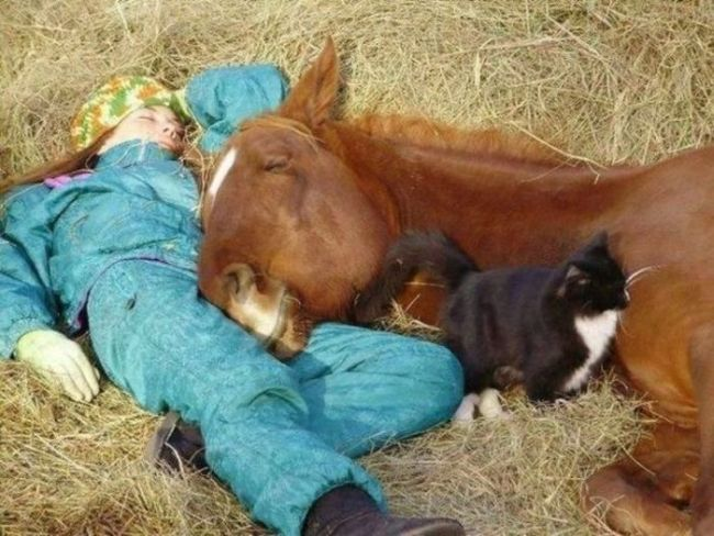 Лошадь и девушка спят на сене прикольные фото