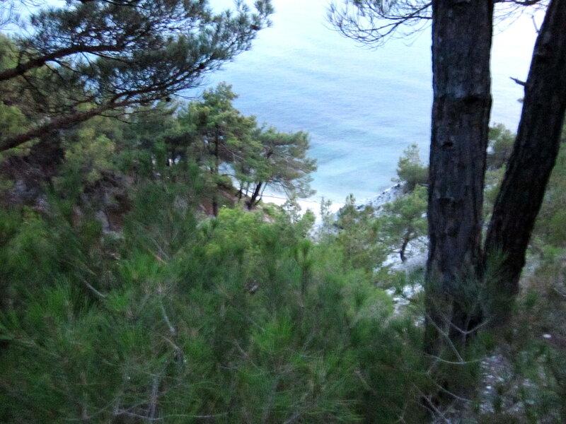 Вид на море из рощи