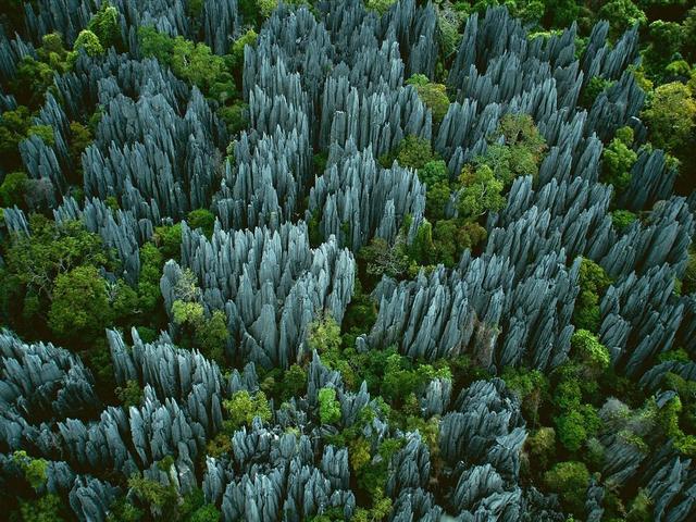 Каменный лес. Заповеднике Цинги де Бемараха. Мадагаскар