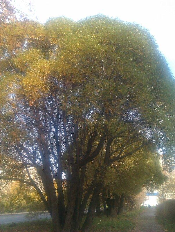 Осень. Деревья