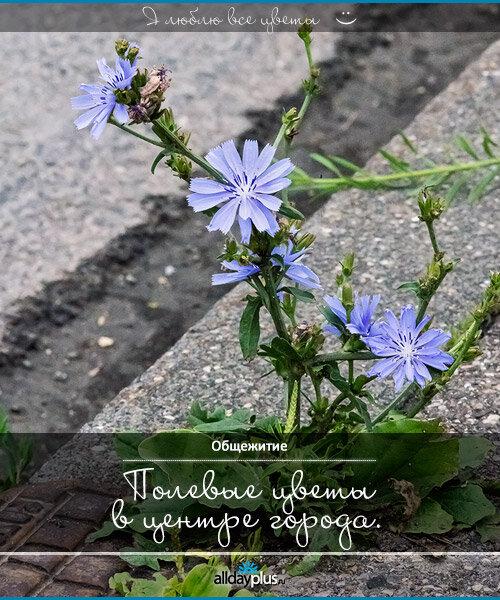 Я люблю все цветы, часть 16