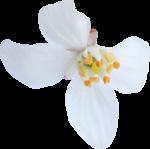 kimla_WFTS_flower3.png
