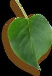 kimla_WFTS_leaf2_sh.png