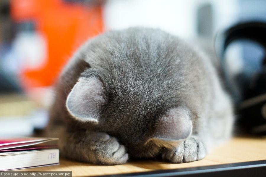 will a cat still spray when neutered