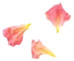 «victorian rose» 0_94a79_2526c5fa_S