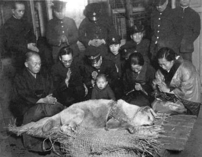 Похороны самого верного пса Хатико, 1935 год.