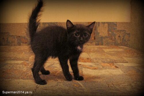 Котята в ДОБРЫЕ РУКИ!!!