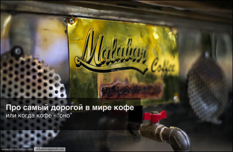 О том, как добывают самый дорогой в мире кофе...