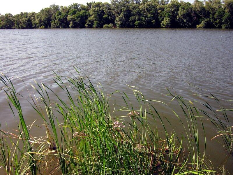 Растительность на берегу Северского Донца