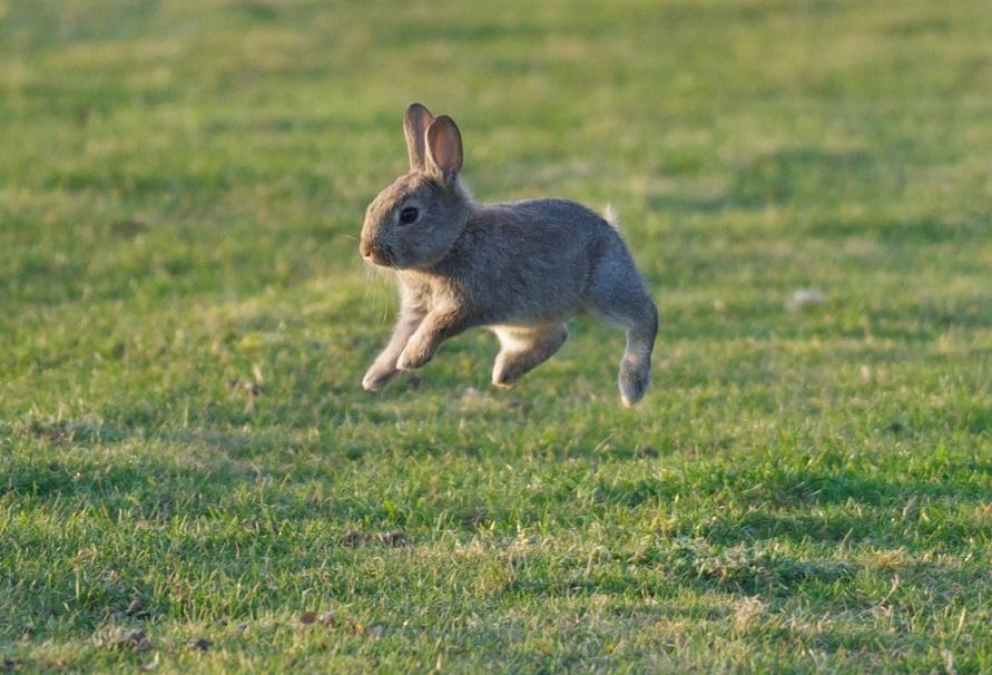 Заяц прыгает картинка для детей