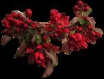 feli_btd_red flowers branch2.png