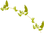 Lilas_Old-Garden_elmt (13).png