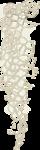 Lilas_Old-Garden_elmt (73).png
