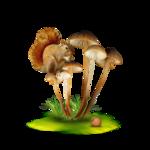 StarLightDesigns_AutumnSunshine_elements (28).png