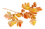 AutumnMelody_by GalinaV_el (38).png