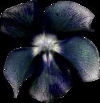 cvd inner storm flower 1.png