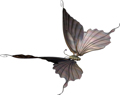 «butterflyDsign_onpointe» 0_8fee6_3d61eeae_L