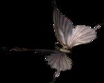 butterflyDsign_elmnt25.png