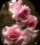 12206401762_fleurs_nikita.png