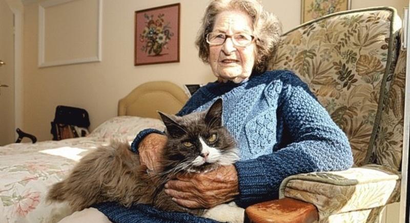 Истории о животных: хомяки погорельцы и кошка, которая нашла хозяйку