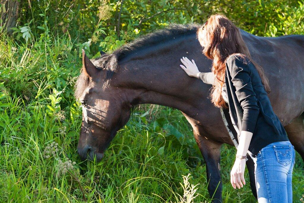 Дружелюбные лошадки