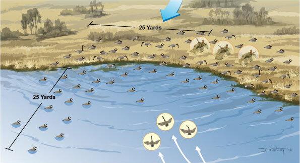 С манками пока всё ясно, кто подскажет как правильно расставить чучела утки на воде?