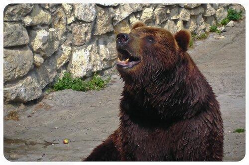 bear-beggar :)