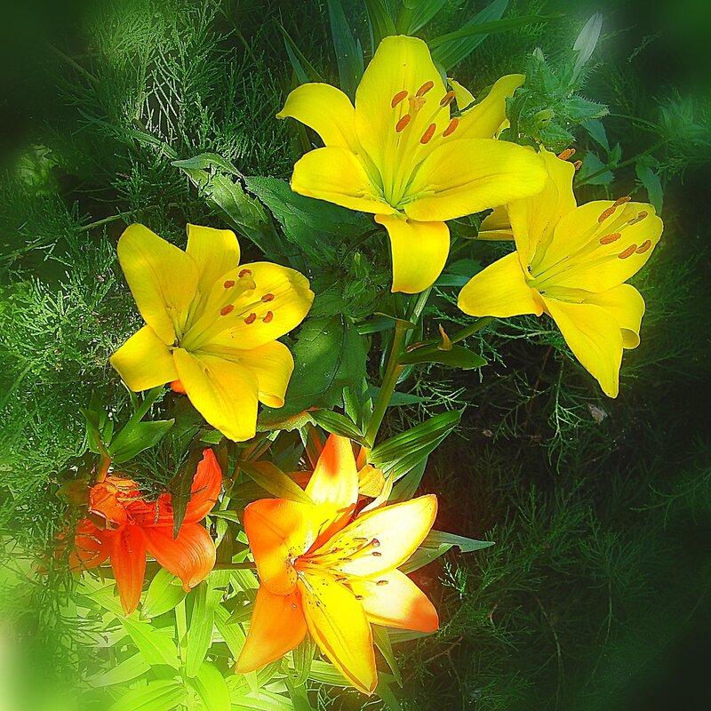 Лето,с.Остров,лилии райского садика
