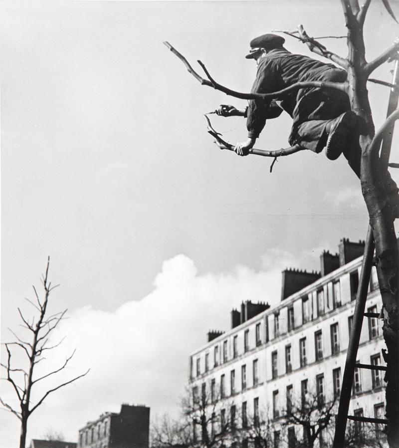 1931. Стрижка деревьев