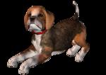собака2.png