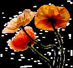 lelferee_fleurs09.png