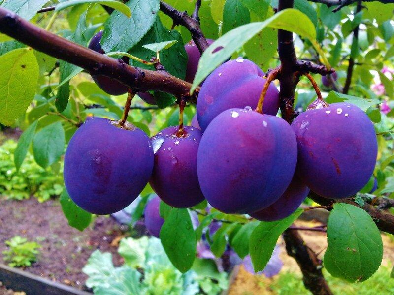 Экзотические плоды мира!