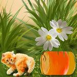 «Рыжий котенок» 0_8c694_ed9597b9_S