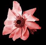 «Four Roses»  0_8cdcf_273b768_S