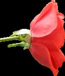 «Brigit_Flowery_Meadow» 0_8d481_17846e10_S