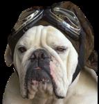 BullDog FlyBoy 100707_jk.png