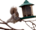 SquirrelBalancing_600x500.png