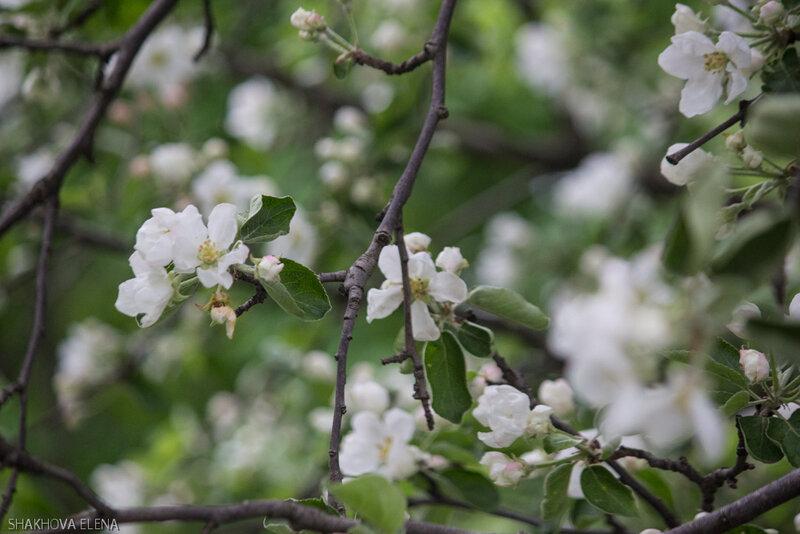 Цветы на ВДНХ