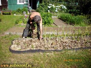 выращивание чеснока озимого