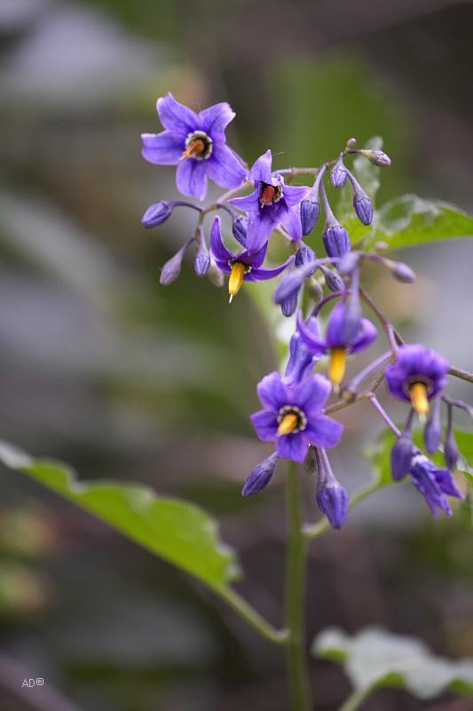 Марьина роща - Ботанический сад
