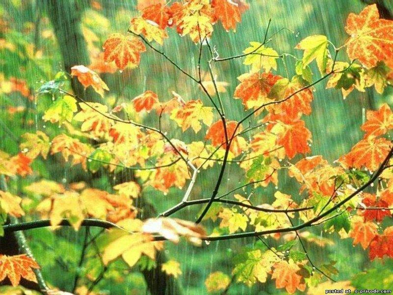 Картинки на рабочий стол с анимацией осень