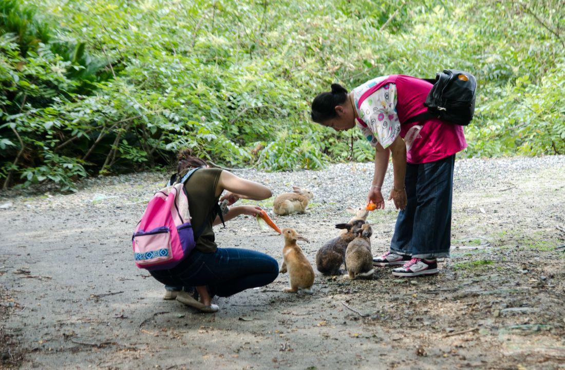Красивые возбуждающие девицы с островов японии фотки смотреть бесплатно фото 555-680