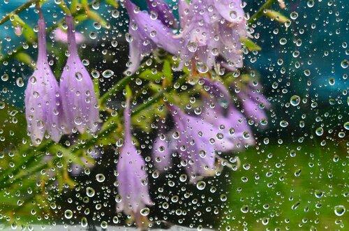 Прекрасная мозаика дождя...