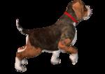 собака1.png