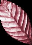 Lilas_Old-Garden_elmt (40).png