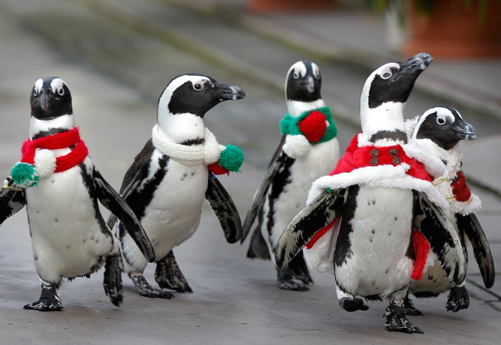 """Attēlu rezultāti vaicājumam """"Рождественские пингвины в Южной Корее"""""""