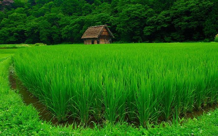 Зеленый цвет в природе картинки