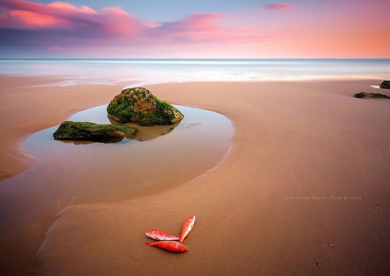 Морские пейзажи Паулу Флопа (Paulo Flop)